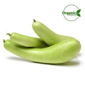 Bottle Gourd (Lauki/Dudhi) Organic