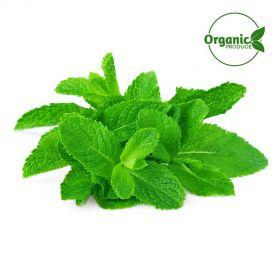 Mint Leaves Organic -100g