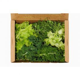 Taste the Garden Salad Mix - Madar Farms