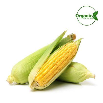 Sweet Corn Organic