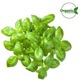 Basil Organic