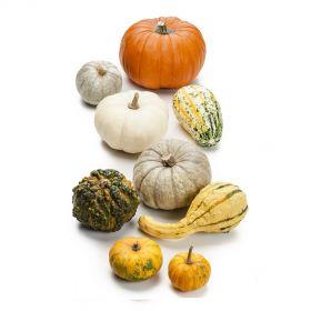 Decorative Pumpkins ~ 1Kg