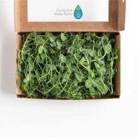 Garden Peas Microgreens - Madar Farms