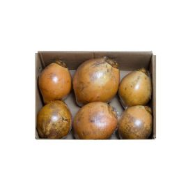 Coconut Yellow Box