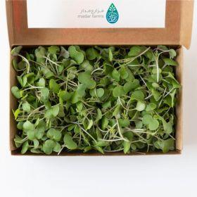 Kale Microgreens - Madar Farms