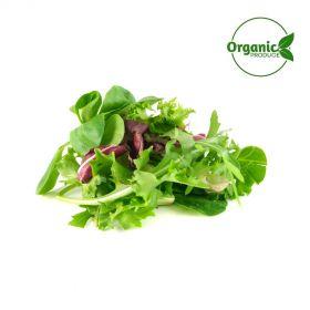 Lettuce Mesclun Organic