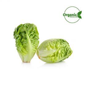 Lettuce Gem Organic