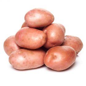 Potato Chat Red