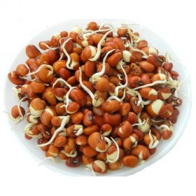 Red Bean Sprouts (Red Chawli Sprouts)